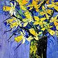 Daffodils  by Pol Ledent