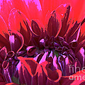 Dahlia Over Exposed by Susan Herber