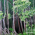Daintree Forest At Twilight by Tatjana Popovska