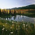 Daisies Grow Near A Lake In Yoho by Michael Melford