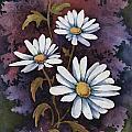 Daisies IIi by Sam Sidders