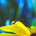 Daisy And Dragonfly by Kay Lovingood