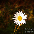 Daisy Is Single But Not Lonely  by Susanne Van Hulst