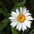 Daisy by Jessica Smith