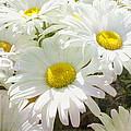 Daisy Summer Garden by Linda Dunn