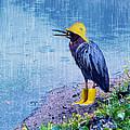 Damn Rain by Tracey Tilson