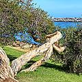 Dana Point Harbor Channel by Mariola Bitner