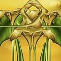 Dance Of The Yellow Calla Lilies II by Georgiana Romanovna