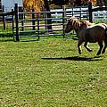 Dancing Pony by LeeAnn McLaneGoetz McLaneGoetzStudioLLCcom