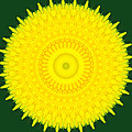 Dandelion Abstract by Chris Day