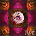 Dandelion In Flame by Laura Iverson