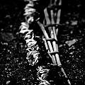 Dandelion Wreath by Hakon Soreide