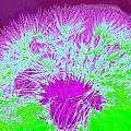 Dandilion Colorized I by Debbie Portwood