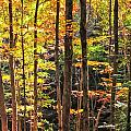 Dappled Sun On Fall Colors by Albert Seger
