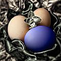 Dark Blue Easter Egg by Danuta Bennett