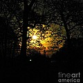 Dark Heart Moon by Tisha Clinkenbeard