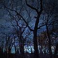 Darkness by Diane Dugas