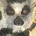 Darth Lemur by Jessmyne Stephenson