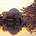 Dawn Over The Jefferson Memorial by Brian Jannsen