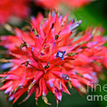 Day Glow Glory by Susan Herber