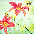 Day Lily Delight by Bonnie Barry