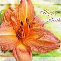 Daylily Greeting Card Birthday by Debbie Portwood