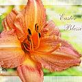 Daylily Greeting Card Easter by Debbie Portwood