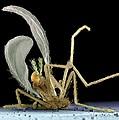 Dead Fly From Car Headlamp, Sem by Volker Steger
