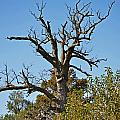 Dead Tree by Debbie Portwood
