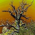 Dead Tree I by Debbie Portwood