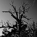 Dead Tree II by Debbie Portwood