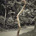 Dead Tree by Sumit Mehndiratta
