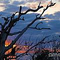 Dead Trees At Sunrise by Adam Jewell