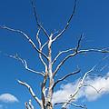 Dead Wood by Marlene Challis