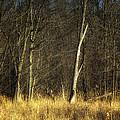 Deadwood Napanee by John Herzog