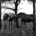 Debbie's Horses by Christy Austin