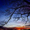 December White Oak Sunrise by Thomas R Fletcher