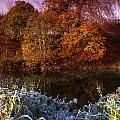 Deciduous Woods, In Autumn With Frost by The Irish Image Collection