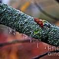 Decorated Branch by Susan Herber