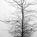 Deep Fog by David Bearden