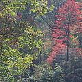 Deep In The Wood by Charlene Gretsch