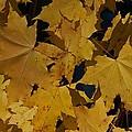 Deep Leaves by Joseph Yarbrough