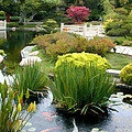 Deep Panorama Of Japanese Garden And Koi by Elaine Plesser