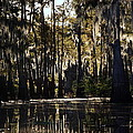 Deep Swamp by Ron Weathers