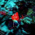 Deep Waters by Marie Jamieson