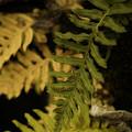Deep Woods Fern by Bonnie Bruno
