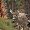 Deer 1660 by Larry Roberson