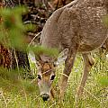 Deer 1661 by Larry Roberson