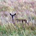 Deer Colors by Steve McKinzie