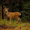 Deer Gazing  by Jeff Swan